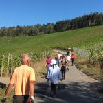 Weingut Neder: Weinlese 2016